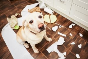 Destructive Dog - Separation Anxiety In Dogs