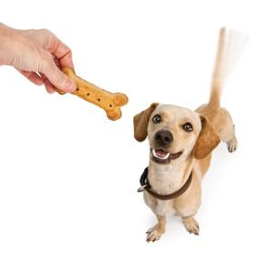 Happy Dog with Treat - Calming Dog Treats: The Most Effective Way to Calm Anxious Pups