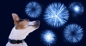 Scared Dog with Fireworks - Firework Anxiety in Dogs