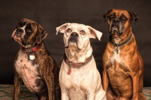what to look for in a pet sitter