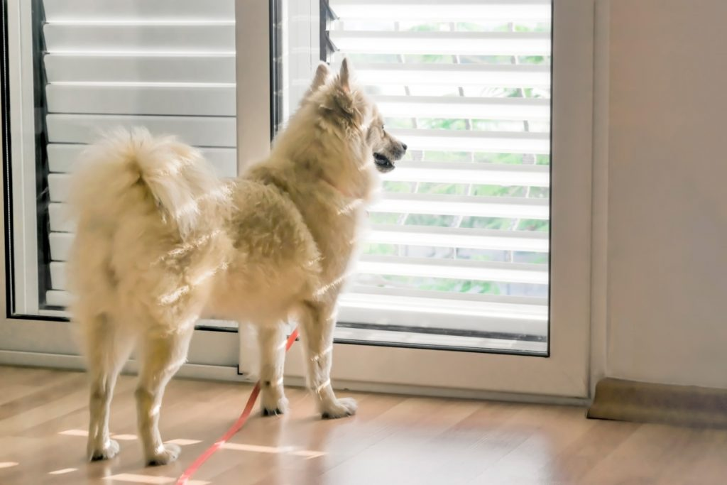 Pet-proofing your Shutters and Blinds