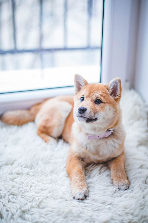 In-Home Dog Boarding